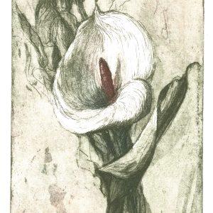 Ylinen Riitta, Valkoinen kukka