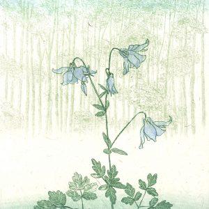 Teoskuva: Krohn Inari - Kukka metsässä