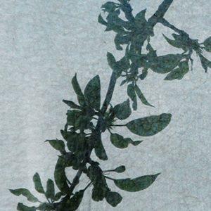 Hintsanen Päivi, Lacrimosa iaponicus I