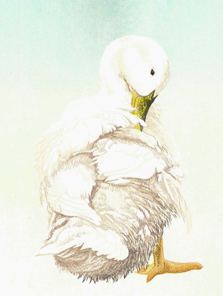 Hokkanen Mirka, The Bather (Daisy)