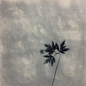 Teoskuva: Kirilin-Helenius Eeva - Löytöjä kasvikuvastosta (2)