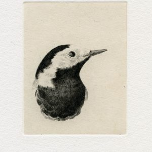 Teoskuva: Albrecht Maija - Mustaa valkoisella VII