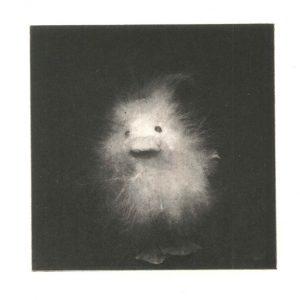 Teoskuva: Laine Janne - 13/12 ; Fluffy V