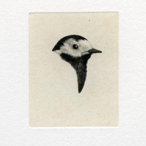 Teoskuva: Albrecht Maija - Mustaa valkoisella III