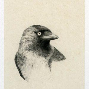 Teoskuva: Albrecht Maija - Naakka