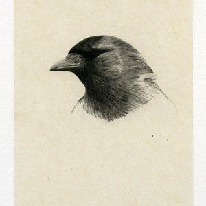 Teoskuva: Albrecht Maija - Pimeää (Naakka)