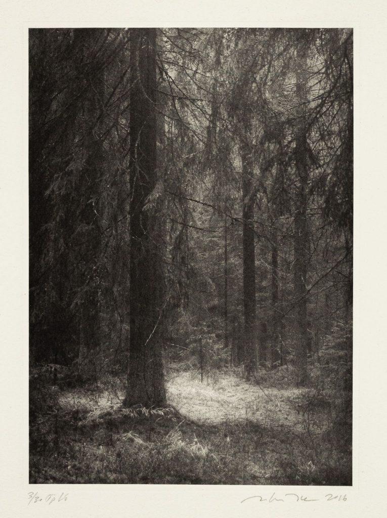 Teoskuva: Joro Juha - Metsän huoneet II