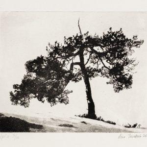 Teoskuva: Toivettula Aino - Tree of Life