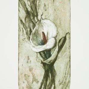 Teoskuva: Ylinen Riitta - Valkoinen kukka