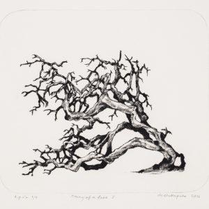 Teoskuva: Hallapuro Mari - Story of a Tree