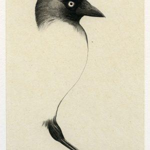 Teoskuva: Albrecht Maija - Eteenpäin