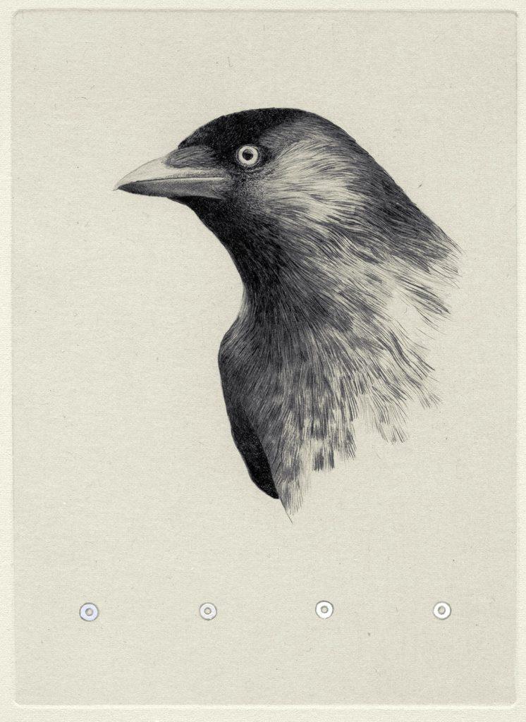 Teoskuva: Albrecht Maija - Sinun silmiesi väri
